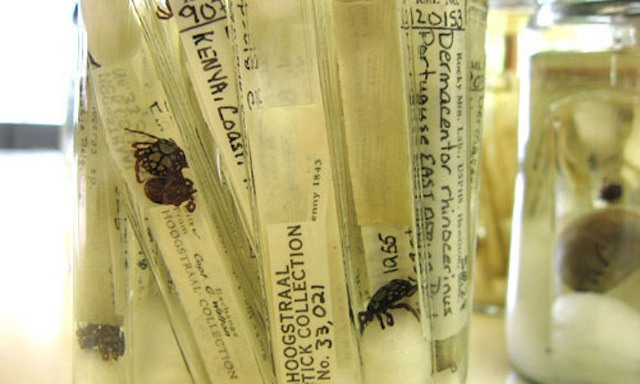 Is this the world's largest collection of Ticks?
